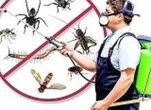 شركة مكافحه حشرات بالدمام والخبر والقطيف والأحساء