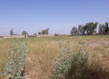 ارض زراعية ملك صرف 30 دونم
