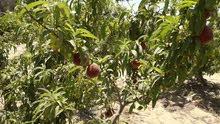 مزرعه 60 فدان للبيع فى وادى النطرون