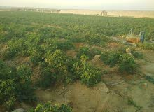 تعلن شركة روان لاستصلاح و تقسيم الاراضي الزراعية عن 50 فدان زراعي و استثماري قابلة للتجزئة