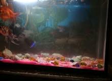 حوض سمك صغير مع ثلاث اسماك