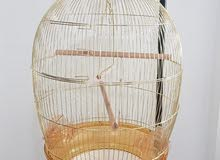 New bird cage