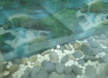 حوض سمك صناعه بحرينيه