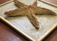نجمة لوحة البحر صناعة يدوية - Handmade sea star painting