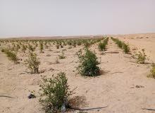 اراضي ومزارع للبيع بطريق الفيوم