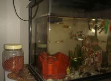 حوض اسماك نضيف جدا ومكمل بجهاز الراوتر ومزود ب20 سمكه صغيره.