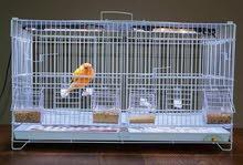 Cage d'oiseaux de séparation  et élevage. 6 mangeoires très bonne qualité.