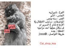 حساب لعرض القطط