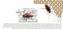 مكافحة حشرات وقوارض متخصصون بمكافحة البق والصراصير بانواعها والفئران والجرذان