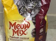 قطه شيرازي 8 اشهر مع كامل الاغراض