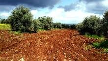 قطعة أرض للبيع (إربد - سمر الكفارات)