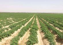 لراغبي الاستثمار الزراعي