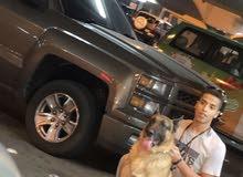 كلاب للبيع جيرمن عمر 3سنين ونص