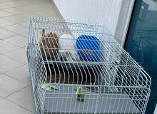 قفص حجم كبير للارانب Rabbit Cage XLarge for Rabbits