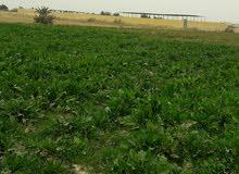 للاستثمار الزراعي 16فدان ملك مسجل عقد اخضر كامله المرافق كهرباء ومياه
