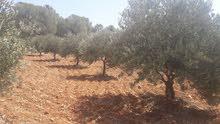 مزرعة  للبيع - تل الرمان
