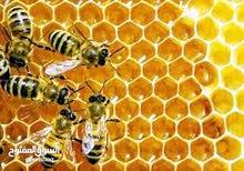 عسل نحل زهرة البرسيم طبيعي 100٪  وعلى ضمان