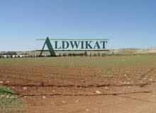 ارض للبيع في منطقة شفا بدران (زينات ربوع ) بمساحة : (500م)