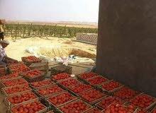 امتلك مزرعه 60 فدان للبيع قابلة للتجزئة