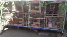 قفص حديد مغلف بقفص خشب يعني قوي حيل حيل يصلح لكافةأنواع الطيور