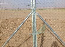 مقوال جميع انواع الشبواك في جميع أنحاء المملكة أبو محمد 0508282746