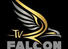 Falcon سيرفر