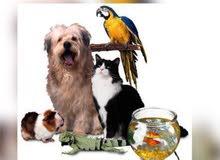 مجموعة خاصة للطيور و الحيوانات