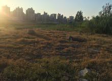 قطعة ارض مساحتها 525 ناصية. بالمعمورة الإسكندرية للبيع