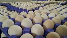 بيض مخصب بسعر مغري جدا جدا جدا