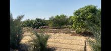 مزرعة مميزة بالاسماعيلية