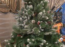 شجرة كريسمس للبيع