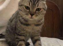 قطط  cat