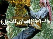 اهوازي للنخيل جميع مناطق الكويت/بيع وشراء النخيل/نقل نخيل وفسايل