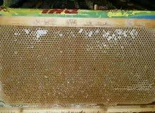 عسل طبيعي مكفول (قطفة الربيع)