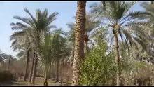 بستان للبيع قرب مشتل العتبة العباسية على طريق ناحية الحسينية