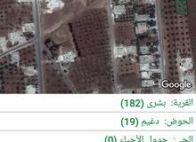 ارض للبيع من اراضي بشرى قريبة جدا للحي الشرقي مساحة الارض 915 متر مشجرة 20 شجرة