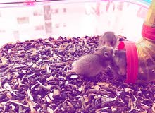 همسترات/hamsters