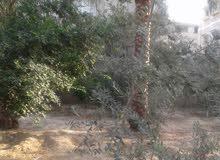 ارض 542 متر طابو بشارع البيئة دير البلح