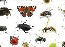 مكافحه حشرات والقوارد والنمل الأبيض