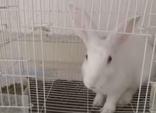 أرنب جميل