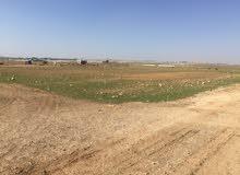 قطعتي أرض بموقع مميز خلف جامعة الإسراء – الطنيب السكة الغربي للبيع