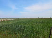 أرض فلاحية للبيع مساحتها 10 هكتار