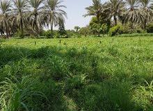 أرض زراعية جميلة للبيع
