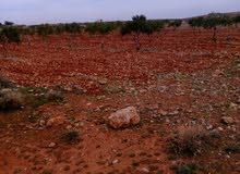 أرض في سفوح جبل الشيخ .