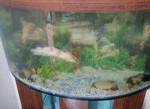 حوض سمك لقطع