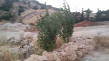 قطعة ارض في السلط ام زيتونه خلة الصخر للبيع بسعر خيالي