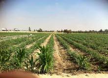 مزرعة 20 فدان رى نيلى بحيازة زراعية