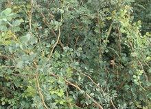مشتل شبه مجهز لإنتاج نباتات الزينة بحاجة لمشغل