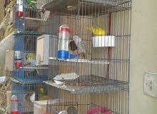 أجود أنواع العصافير للجادين كلمونى أقل الاسعار
