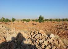 للبيع قطعة ارض في ريف دمشق رنكوس المزارع